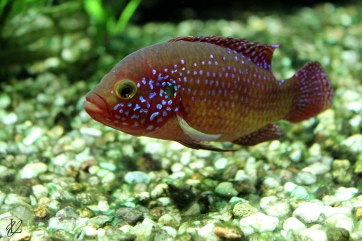 fish1_viktoria_lelek
