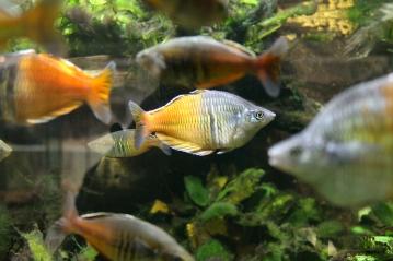 fish2_viktoria_lelek